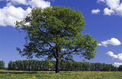 name of the tree tree name images