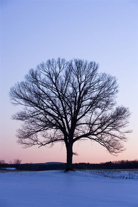 1000 images about 5th grade winter trees on