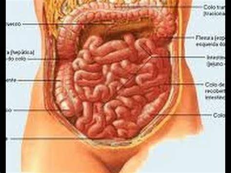 alimentos para aliviar el estre imiento m 225 s de 25 ideas incre 237 bles sobre remedios para el