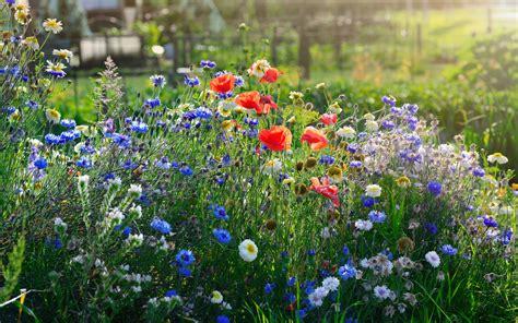 Der Garten Europas by Der Garten Im Juni Garten Europa