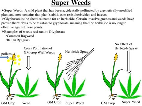 Genetically Modified Definition Crops by Genetically Modified Crops And Food Security Scientific Facts