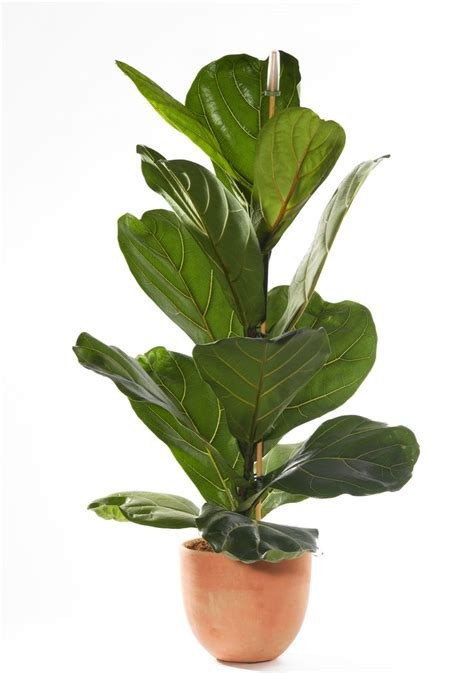 the best indoor plants the best indoor house plants and how to buy them photos