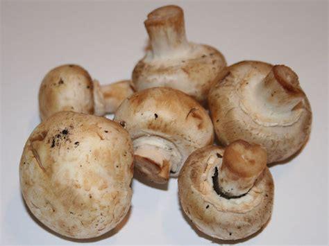 Pilze Im Garten Züchten by Pilze Selber Z 252 Chten