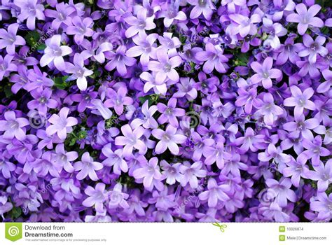 Modern Design Elements abstract purple nature stock images image 10026874