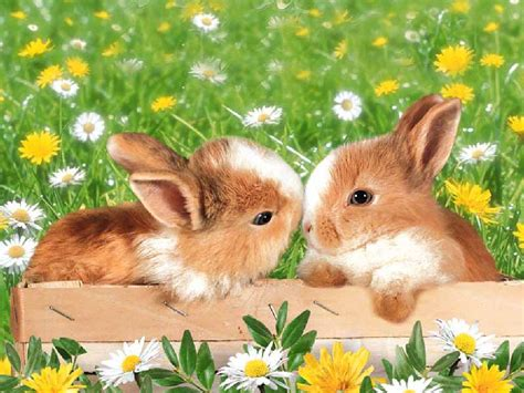 flower and bunny tales of a same different person