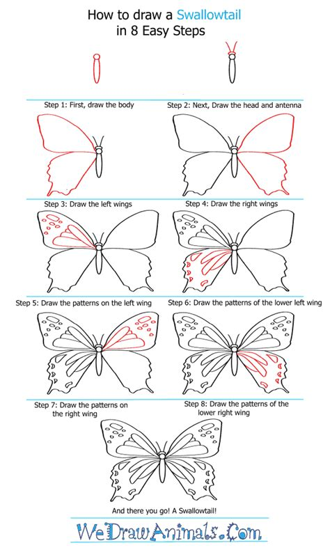 butterfly step by step how to draw a swallowtail