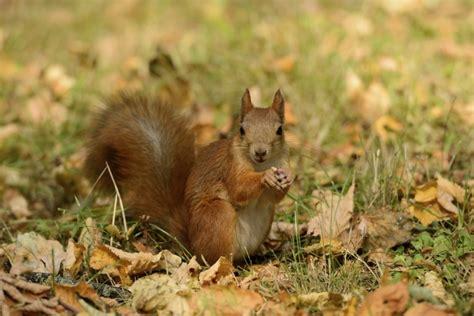 Eichhörnchen Gartendeko by Eichh 246 Rnchen Futterstation F 252 R Den Garten Garten Garten