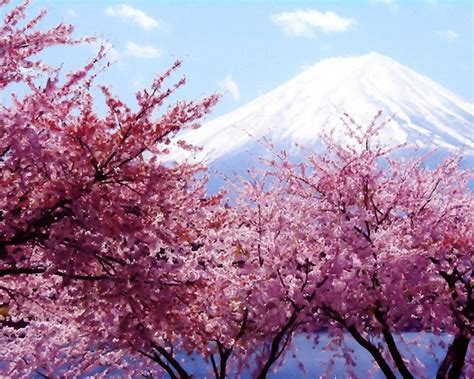 cherry blossom tree wallpaper by squalodensetsu on deviantart