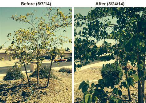 maple tree fertilizer fertilizer spikes tree fertilizer spikes lutz corporation