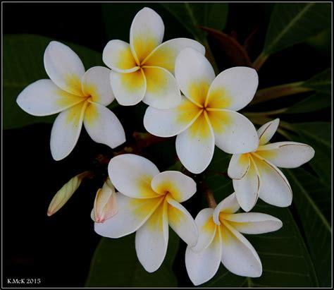 flower simple simple flower pentaxforums 100 images smc pentax