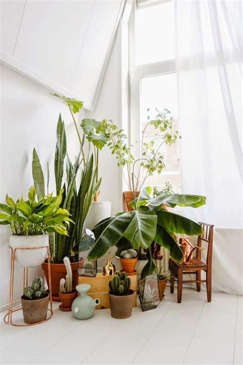 indoor decoration 7 different way to indoor plants decoration ideas in