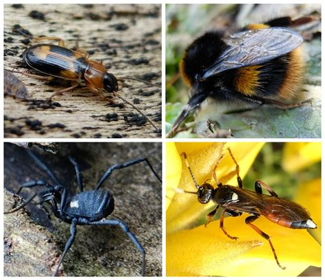 bumble bee rubber st march 2016 sightings st nicks