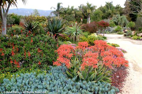 california public gardens janet davis explores colour