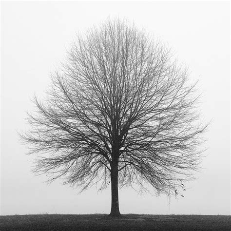 black and white tree 25 best ideas about black and white tree on