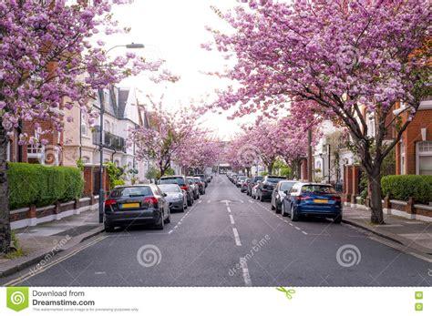 cherry tree auto sales rows of cherry blossom trees editorial photo cartoondealer 35337127