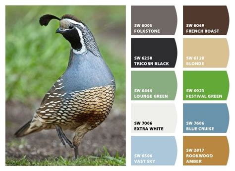 paint color quail 900 best images about exterior house paint color palettes