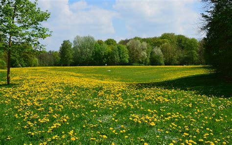 Englischer Garten München Hirschau fr 252 hling 4 in der hirschau englischer garten m 252 nchen