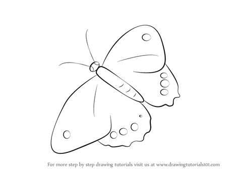 butterfly step by step learn how to draw a butterfly insects step by step