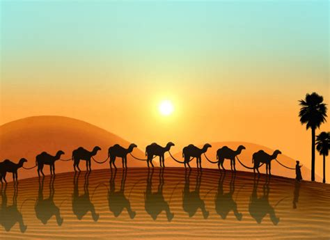 with pictures in lovely animal camel images photos and wallpapers
