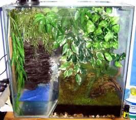 tree setup best 25 frog terrarium ideas on vivarium