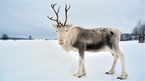 outside reindeer reindeer outside my window flying pictures inspirational