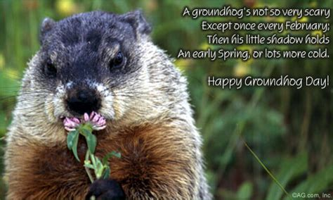 groundhog day america a groundhog s not so scary groundhog day ecard