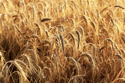 Genetically Modified Definition Crops by Genetically Modified Food Controversies