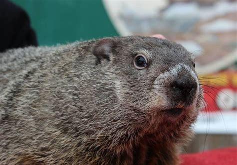 groundhog day jpg bwoglines groundhog day edition bwog