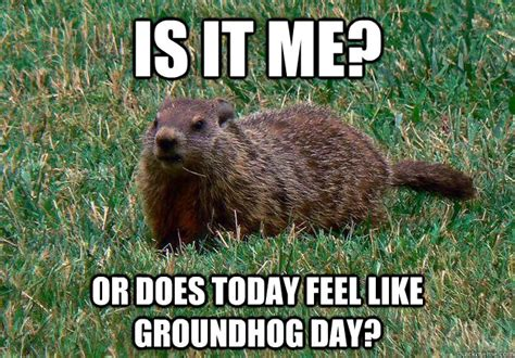 groundhog day expression our school district says there is a problem you think