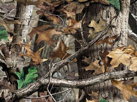 real tree for camo desktop wallpapers wallpaper cave