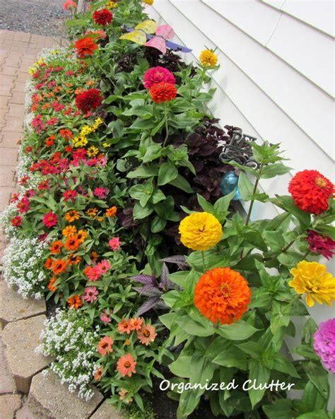 zinnia flower garden organized clutter yard of flowers garden tour 2013