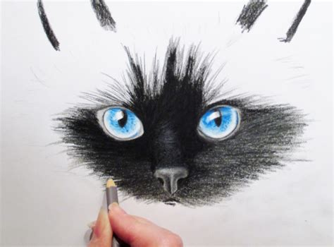 black cat painting step by step drawing tutorials