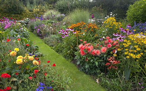 garden border plants flowers how to create a herbaceous border on a budget