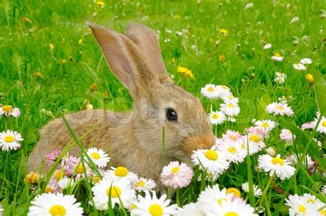 flower and bunny rabbit in the garden with flowers stock photo