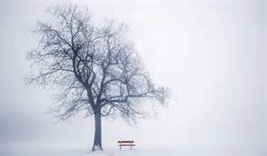 winter trees the mindfulness of winter trees ruminate magazine