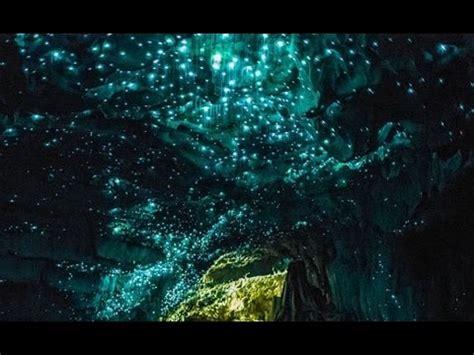 glow in the paint new zealand waitomo glowworm caves glow worm glow worms glow