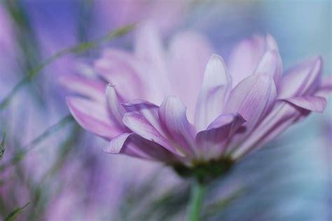 light flowers light purple flower jpg