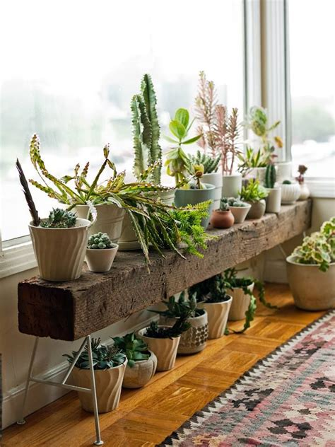 inside house plants 25 best ideas about house plants on plants