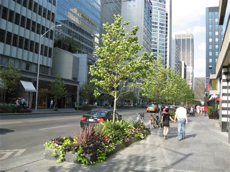 trees toronto forestry silva cells and rainwater capture in