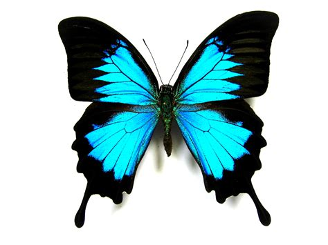 a butterfly dj zydus voices beats