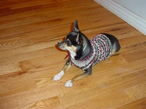 chihuahua sweater knitting pattern the loom knifty knitter chihuahua or small