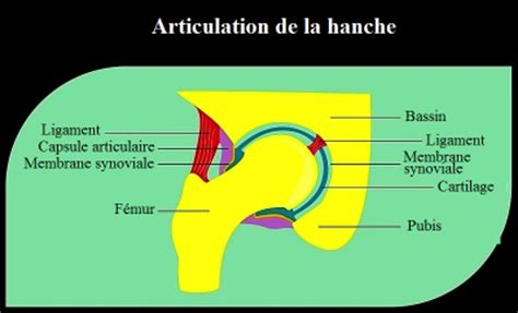 br 251 lure cuisse
