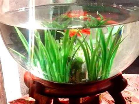 aquascape cupang hias aquarium mini terkeren untuk ikan cupang ikan hias
