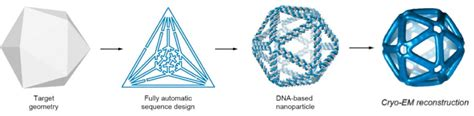 dna origami software automated top design technique simplifies creation of