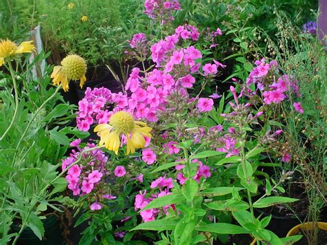garden flowers perennials design ur own room garden flowers perennials perennial
