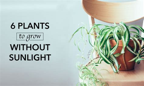 which plants can survive without sunlight 6 plants that can grow without sunlight