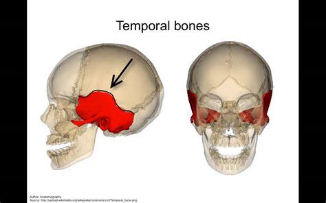 tutorial skull skull anatomy tutorial