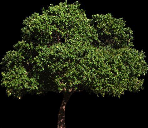 tree on black background workshop 12 notes