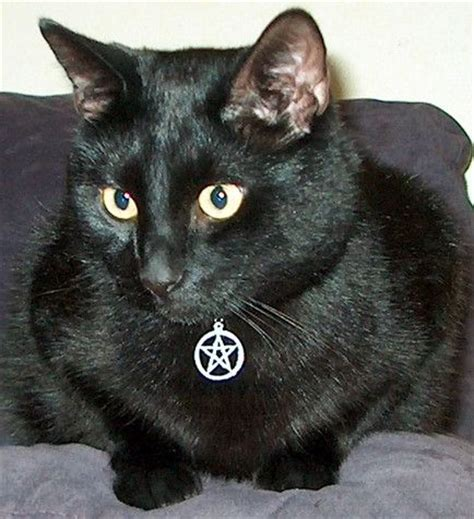 witches cat 25 best ideas about nebula on galaxy