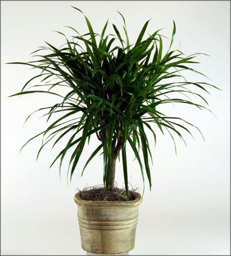Plants Low Light tropical plants low light office furniture